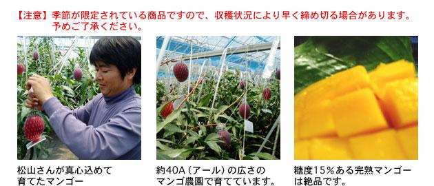 宮崎県串間産