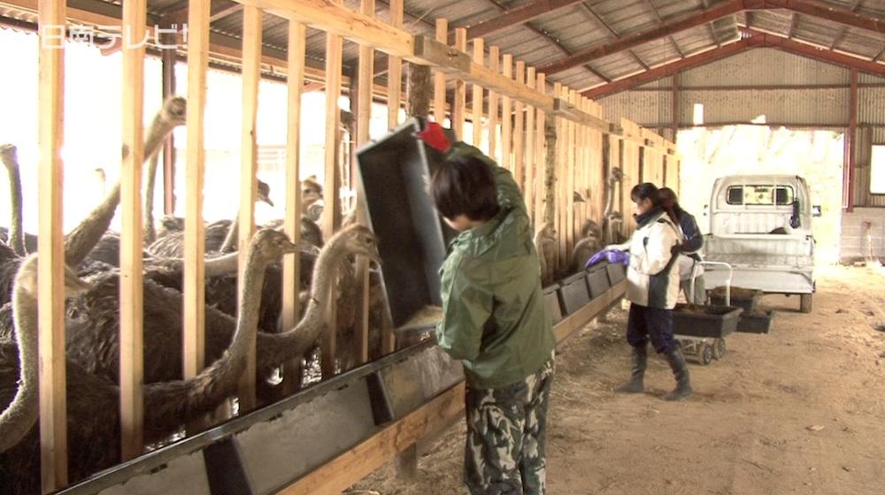 大学生が農業体験