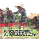 鵜戸神宮で御田植祭