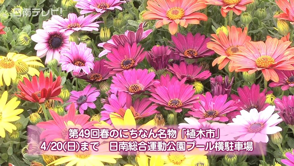 春のにちなん名物「植木市」