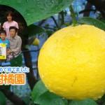 【PR】夏に食べられる「クール日向夏」