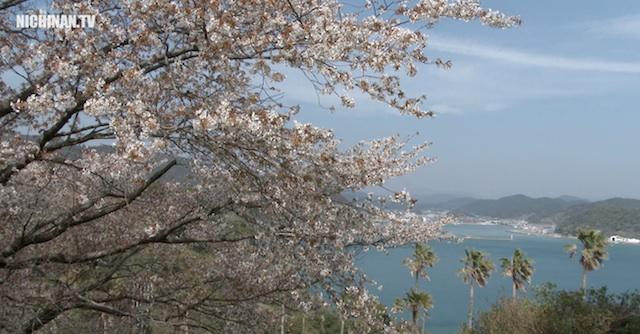 山桜が見頃(4K映像)