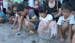 アカウミガメの赤ちゃん 海へ放流
