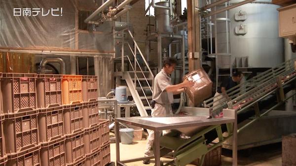 京屋酒造で芋焼酎の仕込み