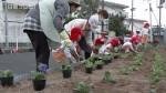 広島カープ歓迎で園児が植栽