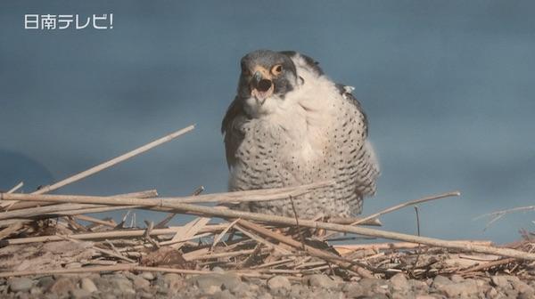 鳴き声が聴ける野鳥写真展