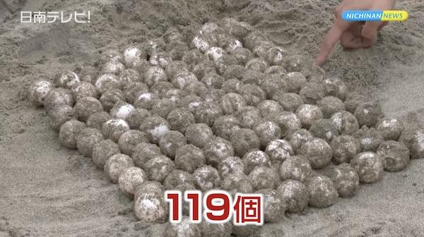 アカウミガメ上陸 今年初の産卵