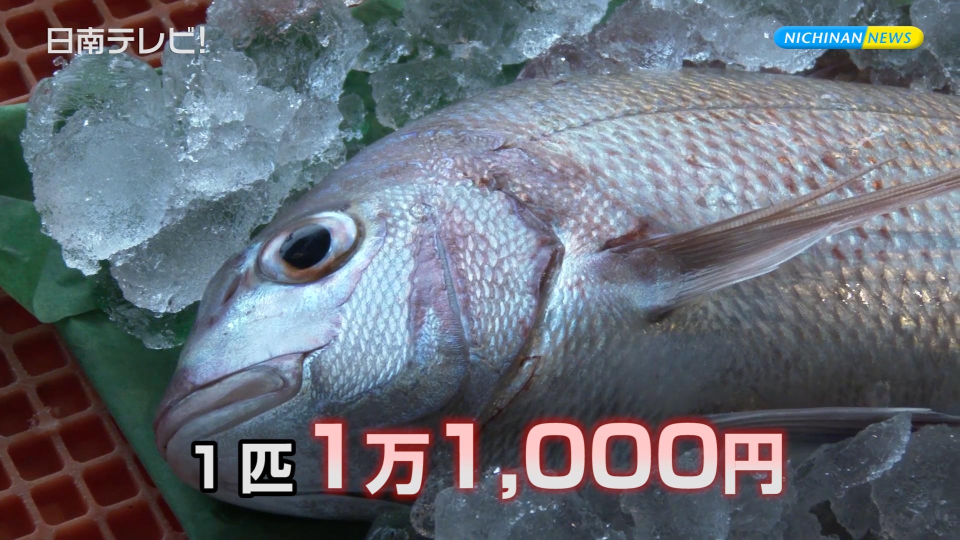 初競り 鯛が1万1000円!?