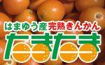 【PR】完熟きんかん「たまたま」解禁!販売中