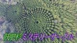 飫肥杉ミステリーサークル 林分密度試験林