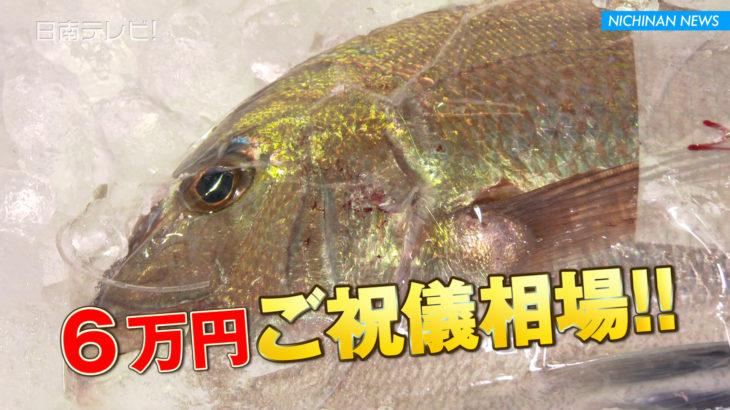 南郷漁協 初競りでマダイ1匹6万円
