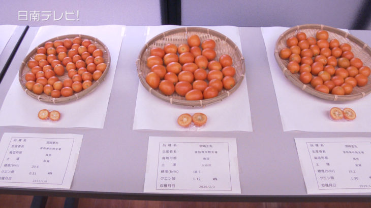 中晩柑果実展示会