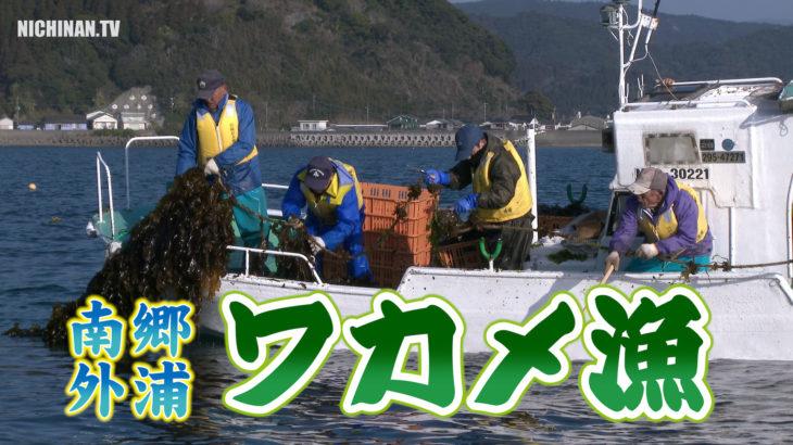 南郷・外浦でワカメ漁始まる