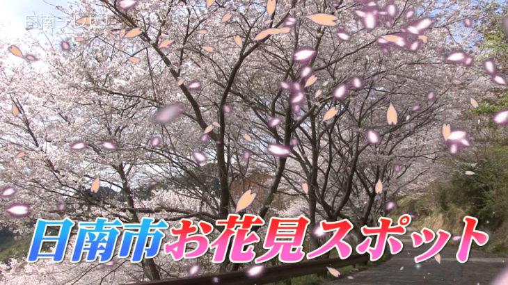日南のサクラ 花見スポット