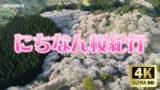にちなん桜紀行2020
