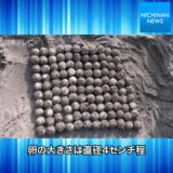 風田浜でアカウミガメの産卵を確認