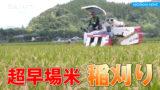 超早場米の稲刈り始まる