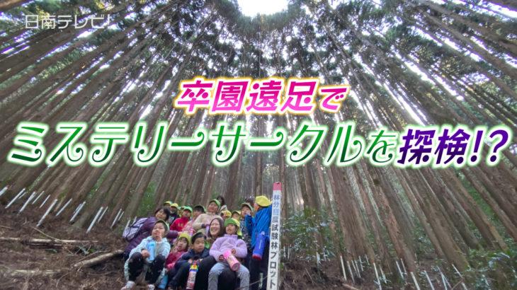 卒園遠足で飫肥杉ミステリーサークルを探検!?