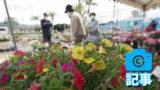 春の植木市 20日まで開催中