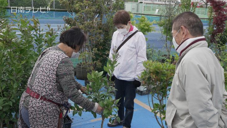 春の植木市