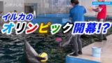 イルカのオリンピック開幕