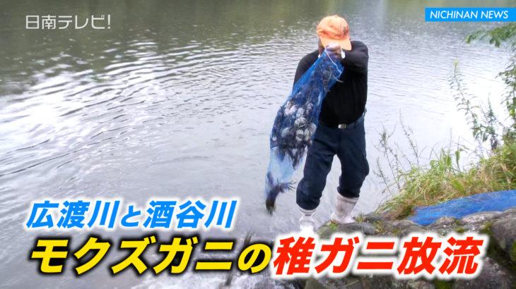 広渡川と酒谷川でモクズガニの稚ガニ放流