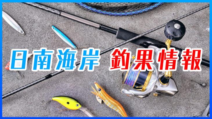 日南海岸 釣果情報(イシダイ・オオモンハタ)
