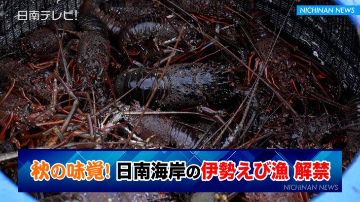 秋の味覚!日南海岸の伊勢えび漁解禁